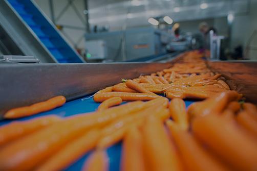 opoa marsia lavorazione carote