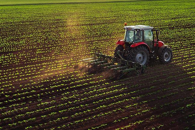 la coltivazione nel fucino