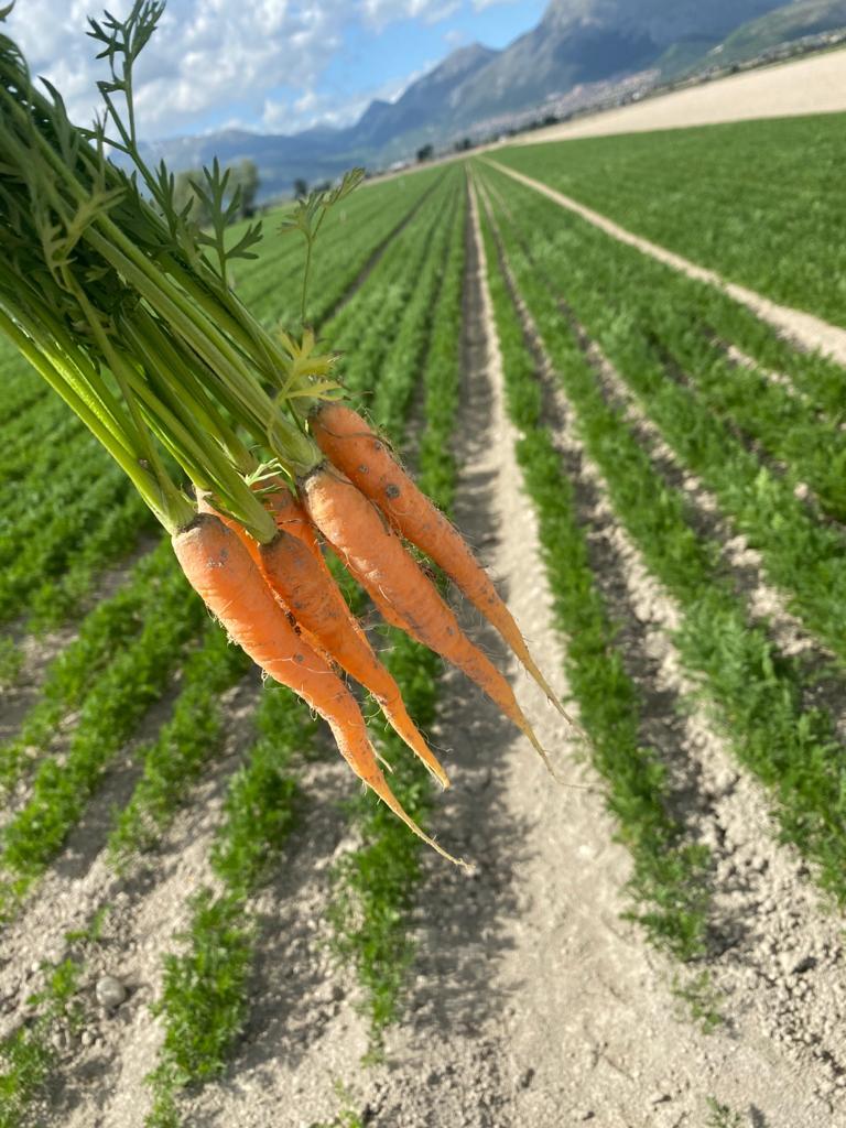 carota-ciaccia.jpeg